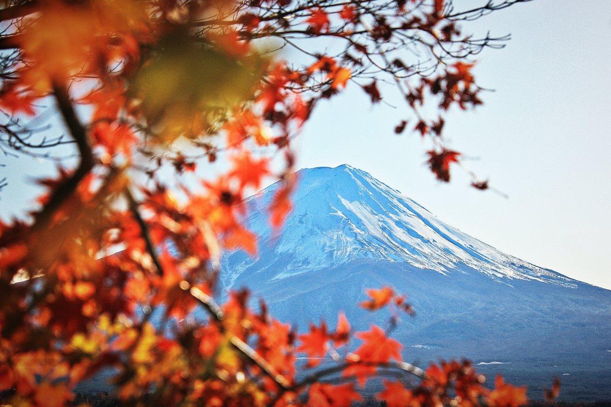 Mount fuji autumn