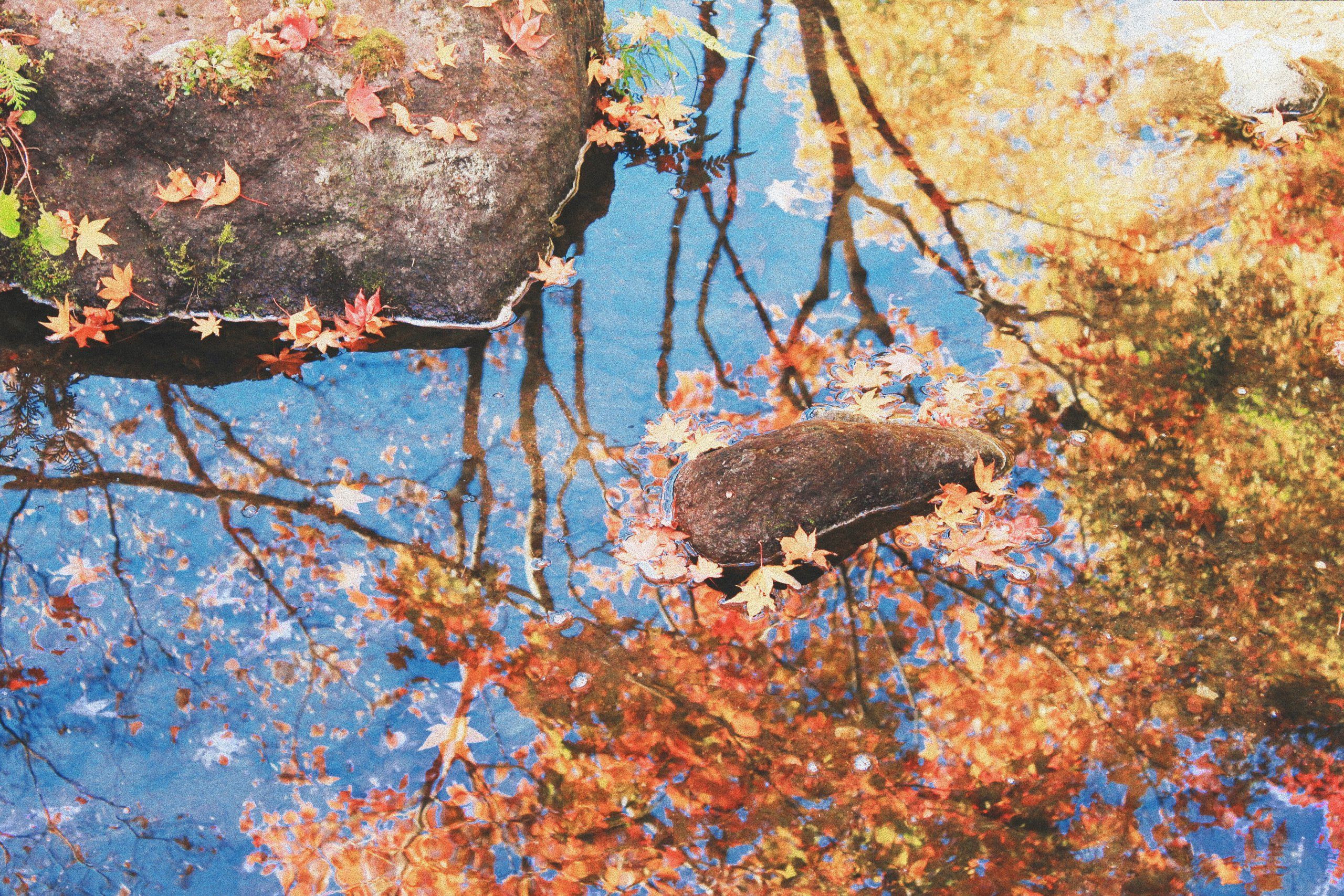 the best autumn activities