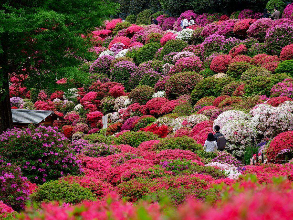 Nezu shrine spring