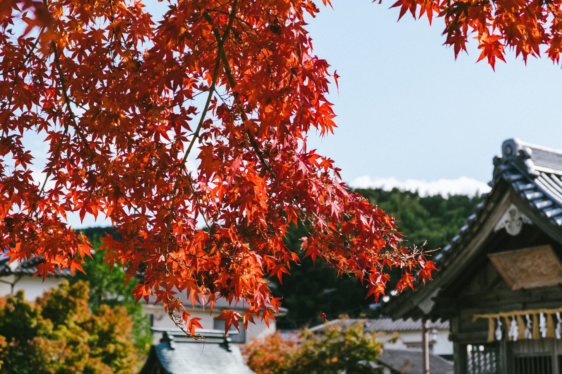 Autumn Dazaifu fukuoka